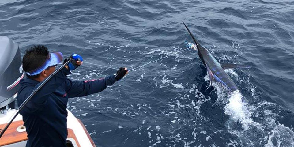 ecuagringo marlin fishing report 20191230 01
