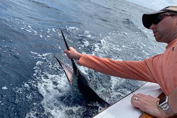 ecuagringo newsletter marlin fishing 201912007 02