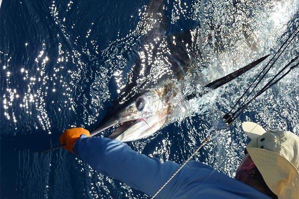 ecuagringo newsletter marlin fishing 201912007 06