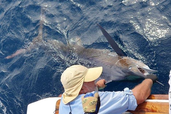 ecuagringo marlin fishing report 20200209 02