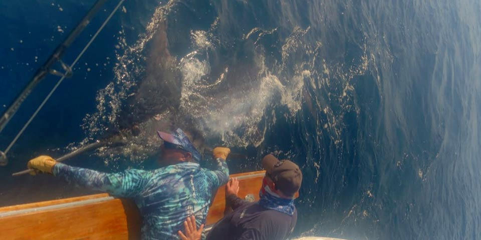 ecuagringo marlin fishing report 20200227 01