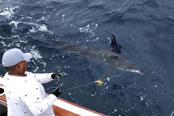 blog galapagos fishing 20200530 04