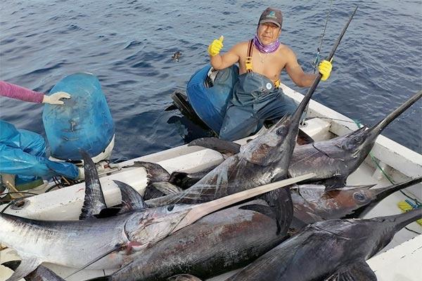 blog swordfish 20200604 02