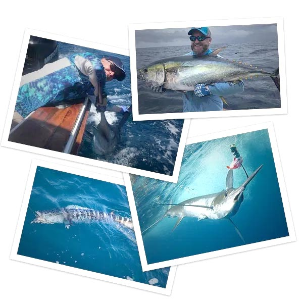 fishing picture collage 02