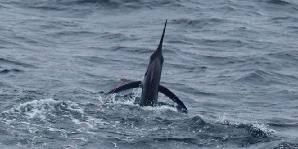 fishing reports 20201018 ecuagringo galapagos 01
