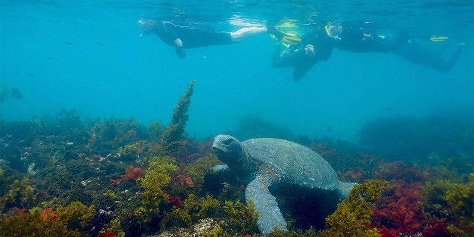blog fishing 20201113 ecuagringo galapagos 01