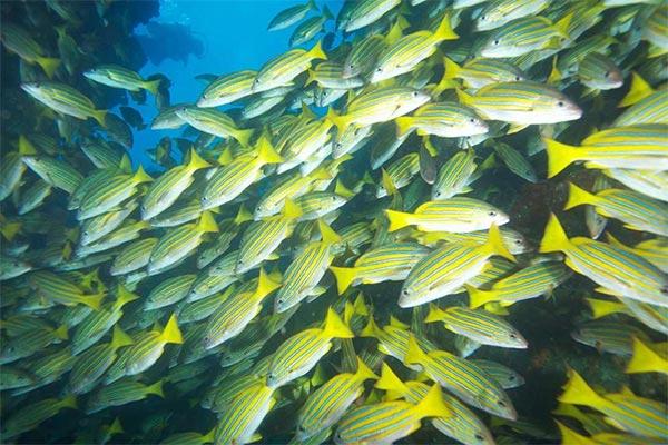 fishing report 20201115 ecuagringo galapagos 03