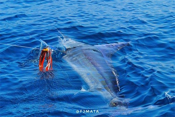 promo marlin fishing 20210306 04