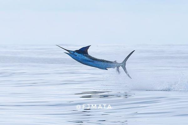 promo marlin fishing 20210310 04