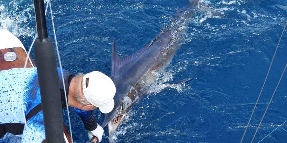 special striped marlin 20210602 01