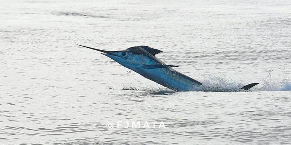 fishing blog ecuagringo 20210731 01