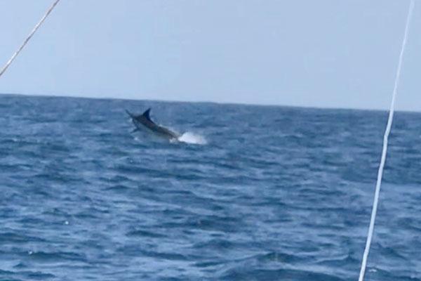 promotion isabela blue marlin fishing 02