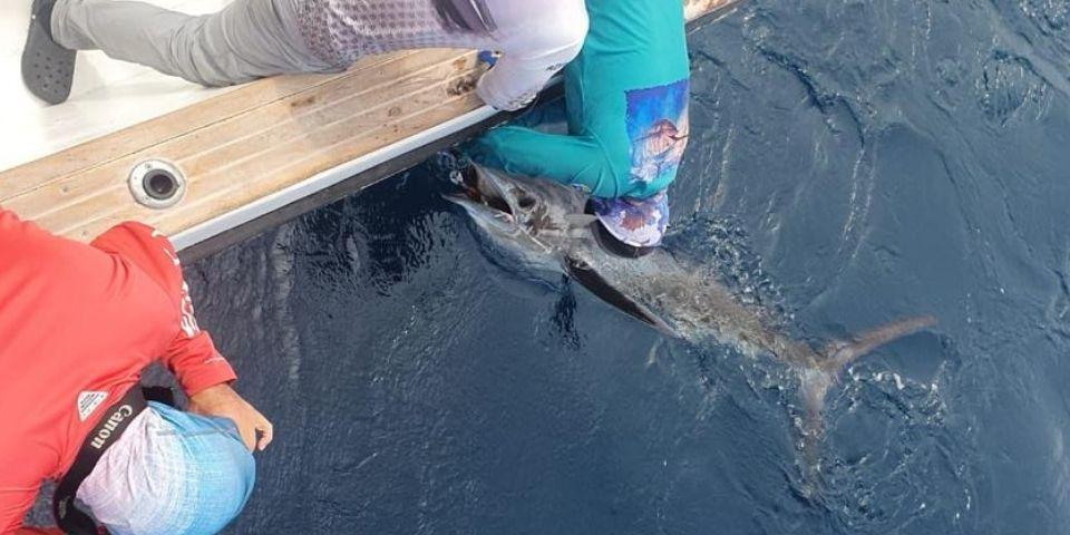 marlin fishing galapagos pic 20211006 01