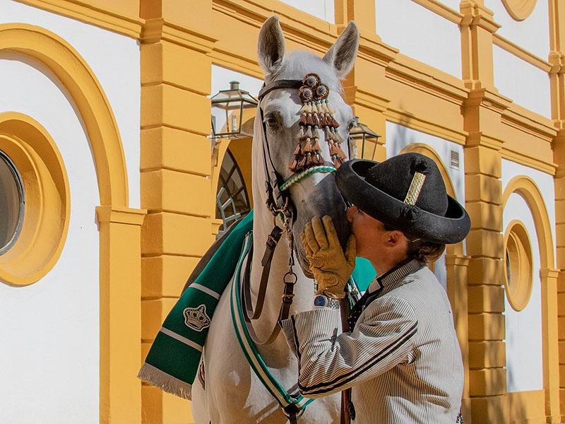 Ecuestre, la información sobre hípica y equitación - Ecuestre.es