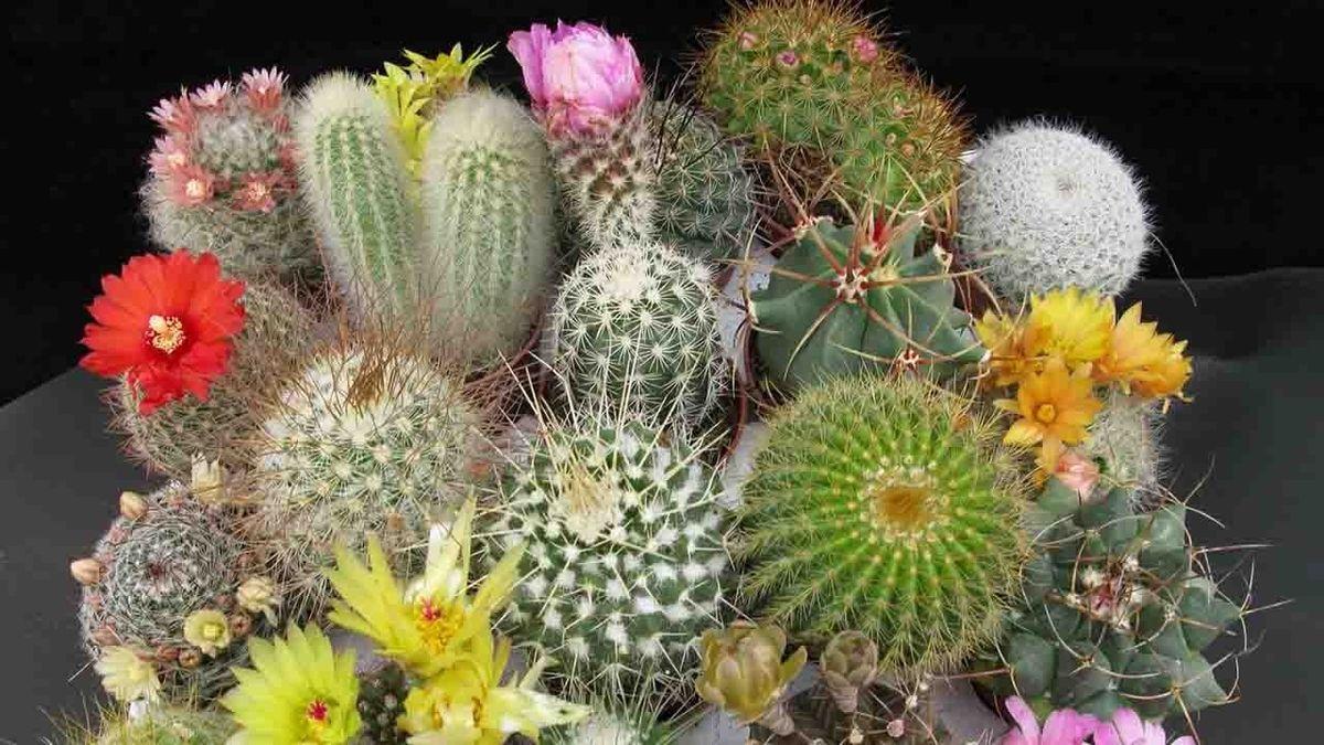 Mini Cactus Plants Sale