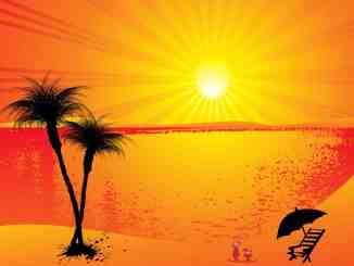 palm trees sun