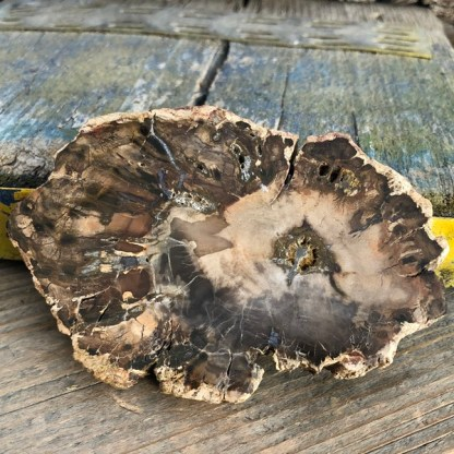 versteend hout plakje fossiel mineralen