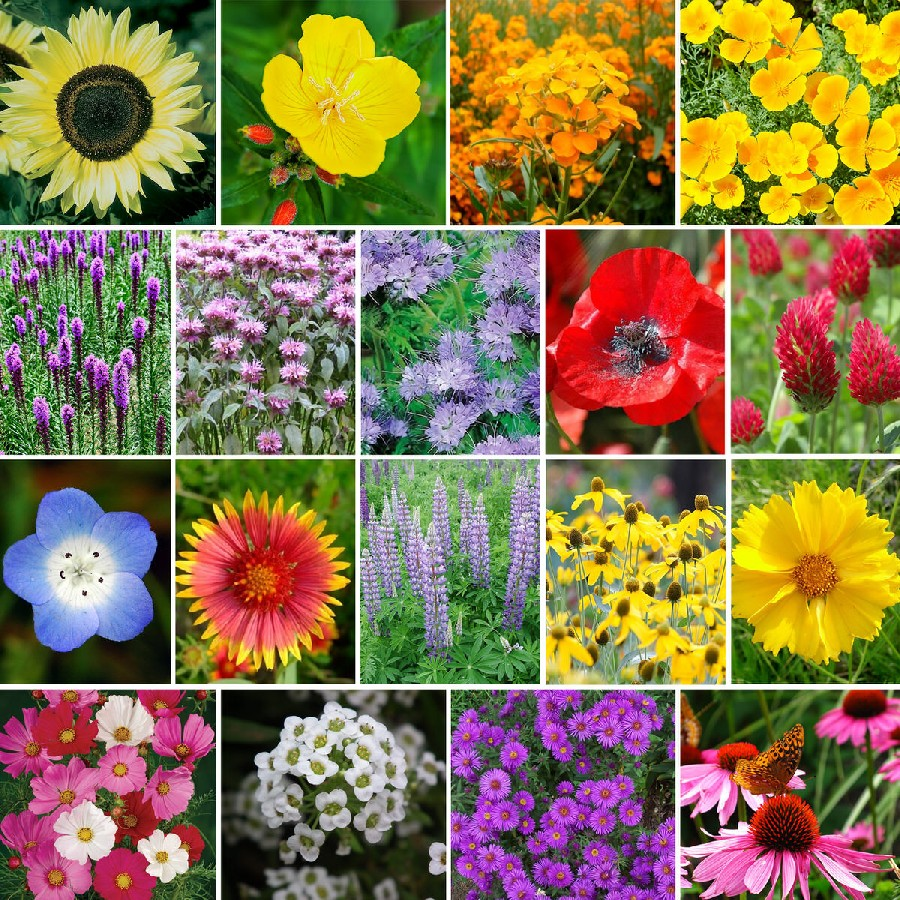 The Bees Knees  Pollinator Wildflower Seed Mix