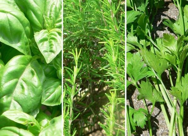 erbe aromatiche in giardino