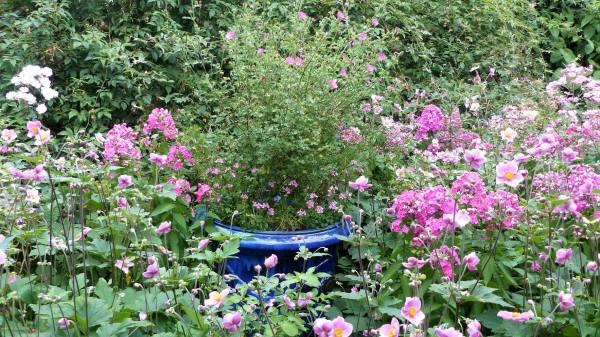 bordura di rose