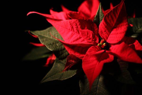 christmas-1673561_960_720