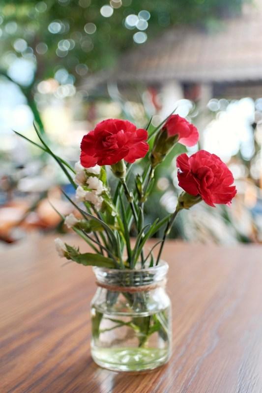 Dianthus carophyllus