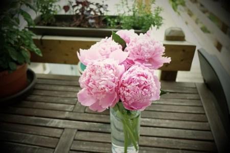 pink-926522_640
