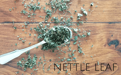 Taking the Sting Out of Nettle Leaf