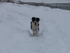 Eve, like most ESs, loves to play in the snow.