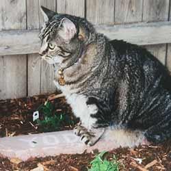 Merlyn sits on Yoda's gravestone.