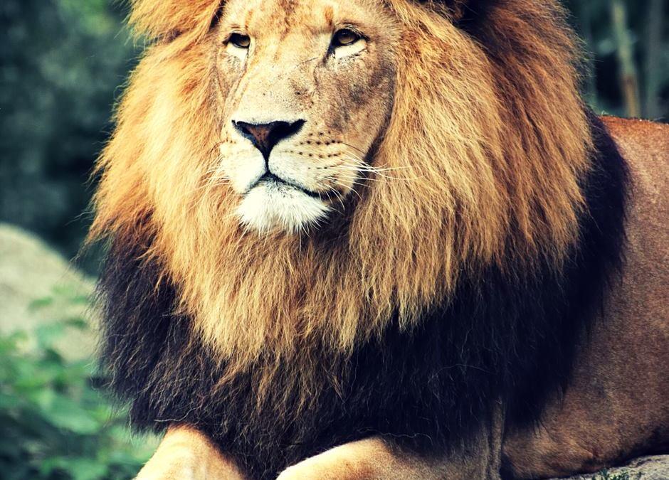 Your kingdom come…