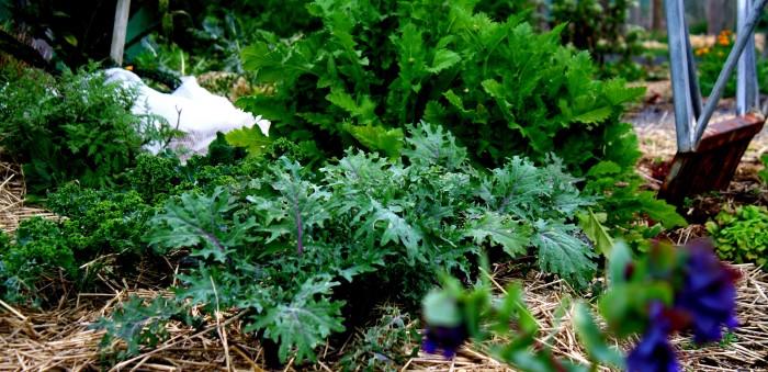 spring kale