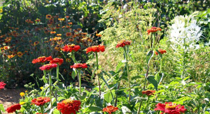 autumn vegie patch