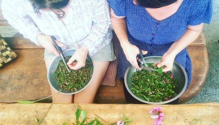 How To Make Echinacea Tincture