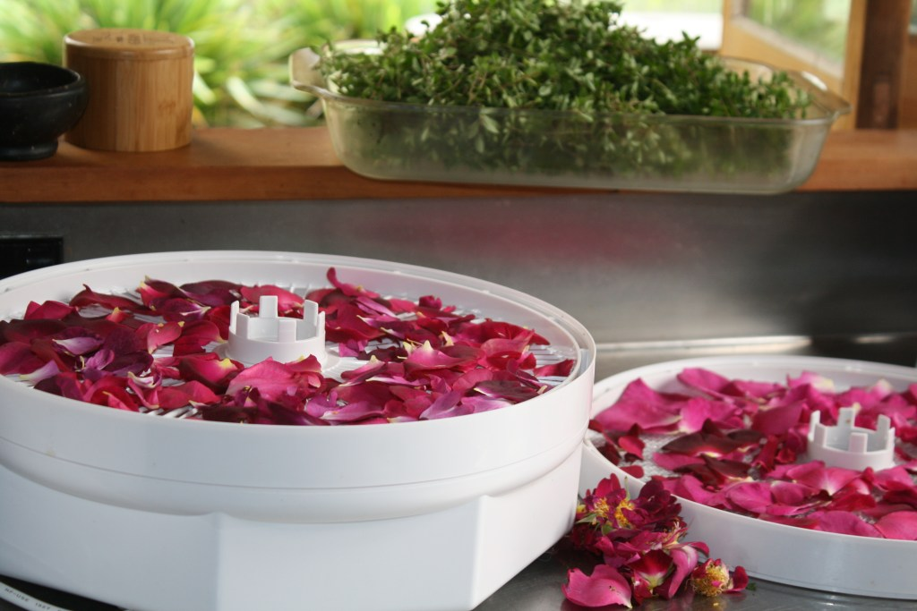 drying rose petals in the dehydrator