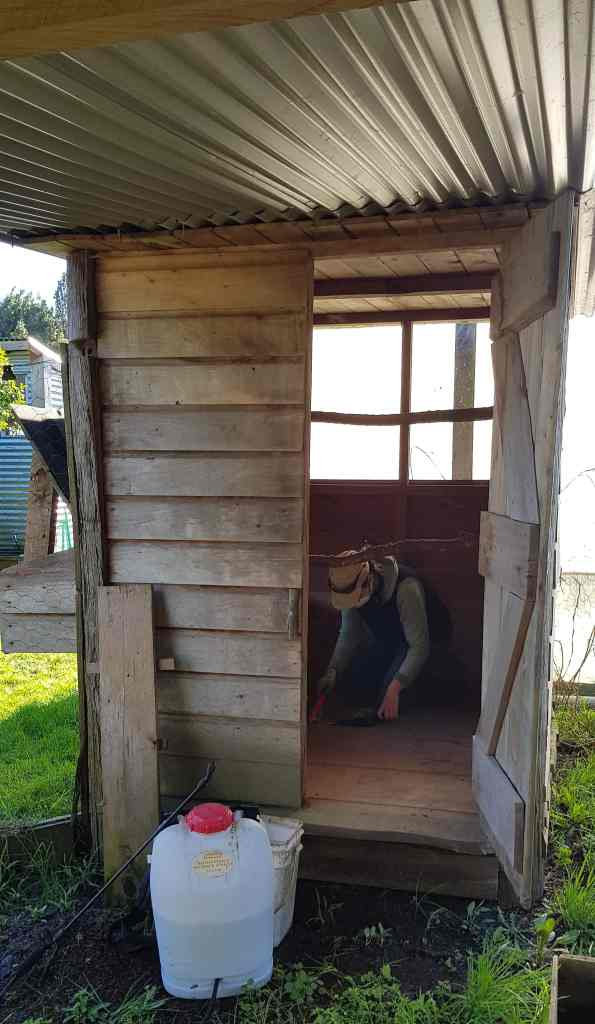 sweep out the sawdust in the chookhouse ediblebackyard nz