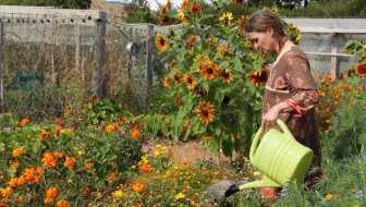 liquid feeding the vegetable garden with a biological brew