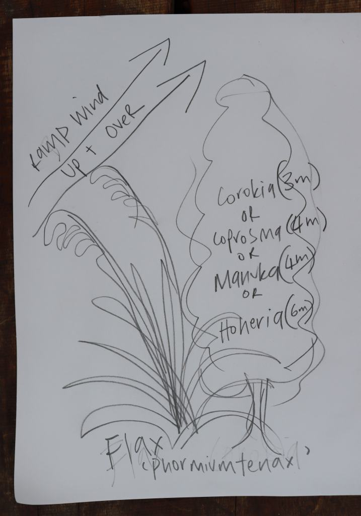 sketch showing how to ramp the wind up with plantings of flax and corokia