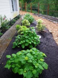 edible landscape plan small