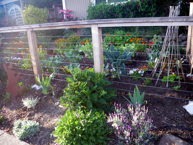 edible front yard  Edible Landscaping Made Easy With Avis