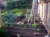 edible landscape   Edible Landscaping Made Easy With Avis ...