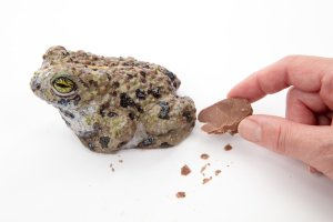 A hand snaps a piece off a realistic chocolate toad against a white background