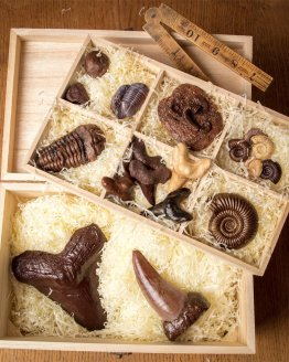 a collection of chocolate fossils in a wooden hamper gift box against wooden background