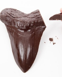 a realistic chocolate megalodon tooth being snapped by a hand on what background