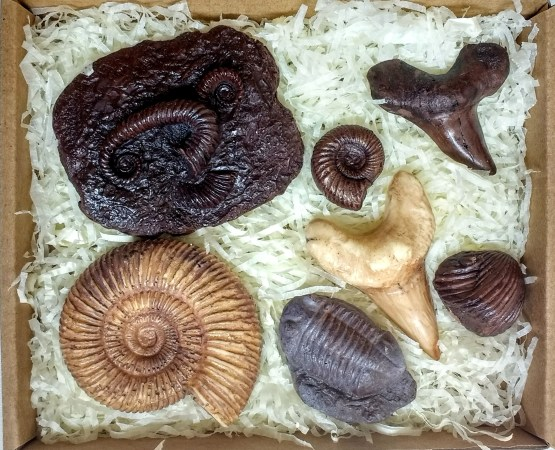 A box of fossils made from chocolate on a shredded tissue background