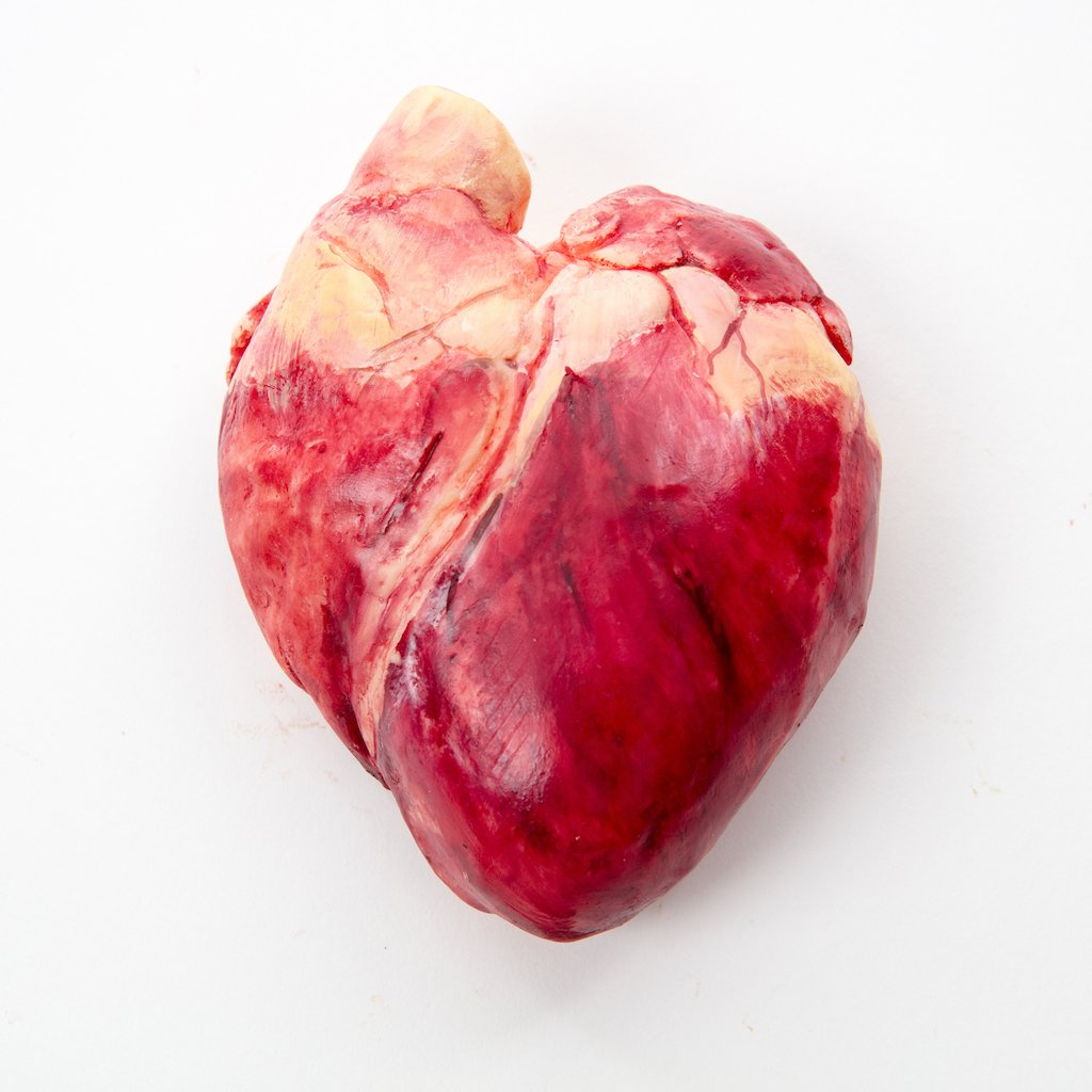 Chocolate Human Heart The Edible Museum