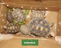 Carabineros incauta contrabando de animales exóticos en frontera con Bolivia