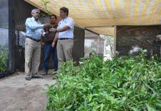 CONAF entregó 1800 árboles a Municipalidad de Alto Hospicio
