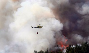 """Destacado experto forestal: """"Decir que todos los incendios son intencionales es un aprovechamiento político"""""""