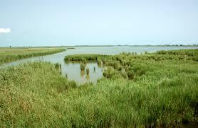 arrozales Delta del Ebro